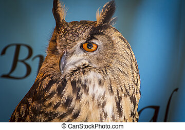 Predator eagle owl in a sample of birds of prey, medieval...