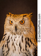 Carnivore eagle owl in a sample of birds of prey, medieval...