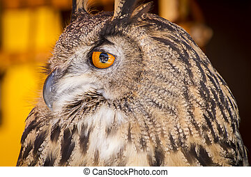 Looking eagle owl in a sample of birds of prey, medieval...
