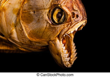 Sea monster - close up of the scary mouth of a dried pirana
