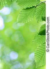 Fresh green leaves with smooth bokeh background