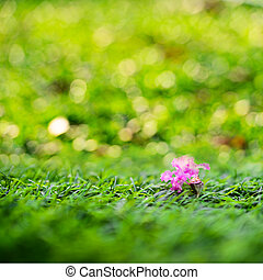 Pink flower with green grass and defocused.