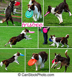 collage with dogs playing with frisbee - collage with funny...