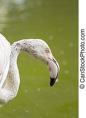 Flamingo Close Up 2