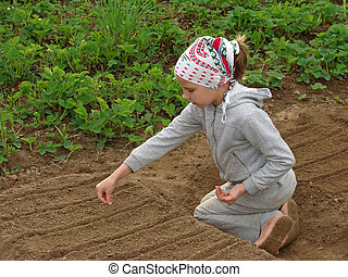 young farmer - child sowing seeds to the vegetable bed...