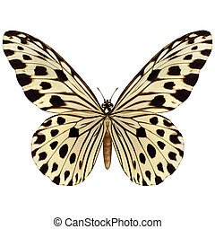 Idea Leuconoe Butterfly - 3D digital render of an idea...
