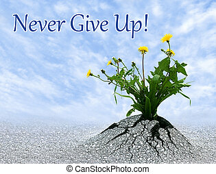 Never Give Up - Never give up, inspiring conceptual image...