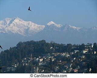 A bird flies over the Himalayas