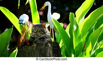 Pensive Maine Coon cat sitting on a tree stump - Pensive...