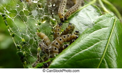 Caterpillar disaster
