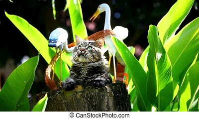 Playful cat sitting on a tree stump - Playful cat sitting on...