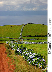 azores road at the coast in s miguel island