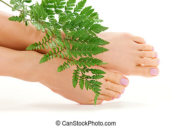 female feet with green leaf - picture of female feet with...