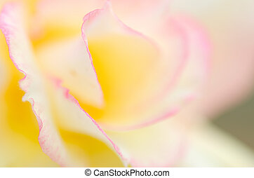 Close up on petals with soft focus
