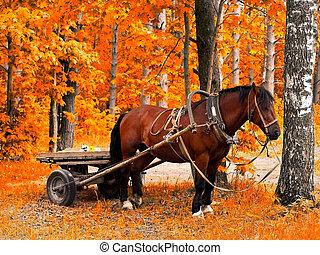 horse in golden autumn - Waiting horse in golden autumn...