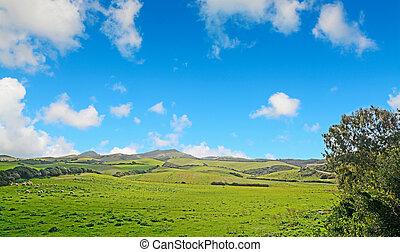 藍色, 綠色, 天空, 草地