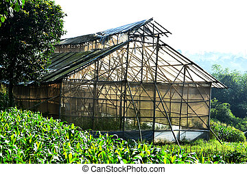 Abandon green house made from bamboo and plastic - in...