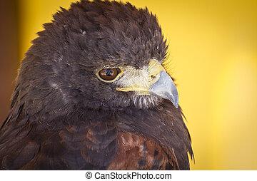 Eagle head in a medieval fair, spain