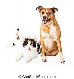 Happy Dog and Cat Sitting Together - Happy and smiling mixed...