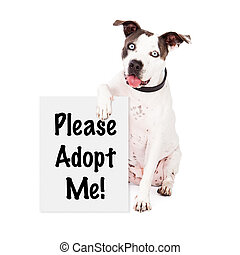 American Staffordshire Terrier Rescue Me - A friendly...