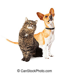 Dog and Cat Looking Up Together - A cute medium size mixed...