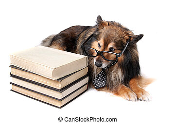 Sheltie dog with books