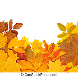 Autumn leaves - Decorative frame from bright autumn leaves