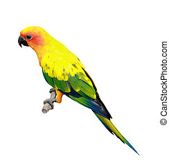 Sun Conure parakeet - portrait of Sun Conure isolated on...
