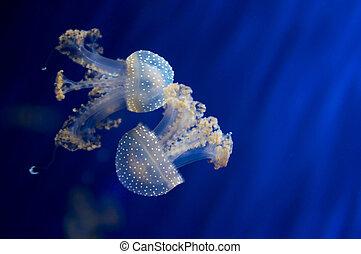 jellyfish underwater pool and ocean