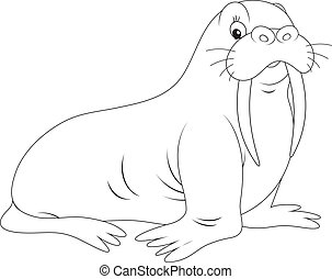 walrus, black and white outline vector illustrations for a...