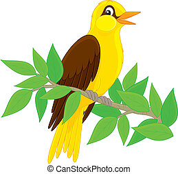 Oriole - Yellow-and-black hangbird singing on a branch