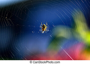 Spider in web - spider web on a blue background
