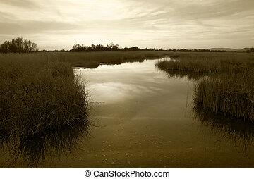 Wetland landscape. Sepia tone. Tablas de Daimiel. Ciudad...