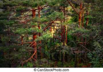 Fairy tale forest - Colorful glowing fairy tale deep forest