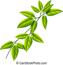 A leafy plant - Illustration of a leafy plant on a white...