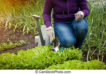 photo of woman working ar garden on salad bed - Closeup...