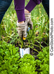 woman in gloves working with small shovel on garden bed -...