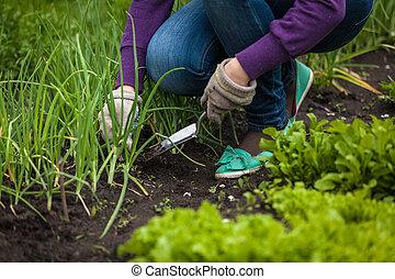 婦女, 洋蔥, 相片, 挖掘, 黑桃, 在外