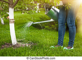woman pouring water of watering can on tree at garden -...