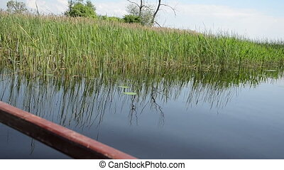 water bulrush - boat floats on lake along long the water...