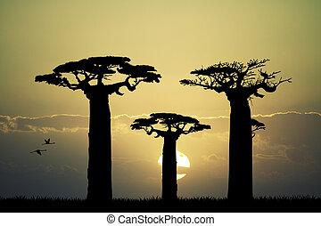 baobab at sunset - Illustration of baobab at sunset