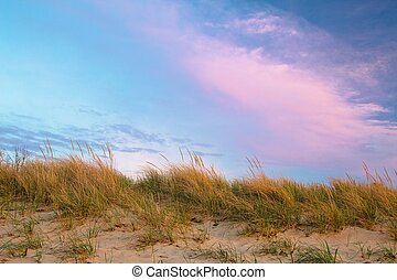 Sea Oats - Coastal sand dune with sea oats set against a...
