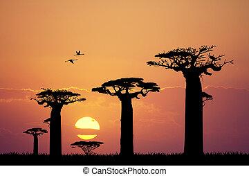 baobab silhouette at sunset - Illustration of baobab...