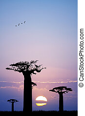 baobab at sunset - Illustration of baobab at sunset