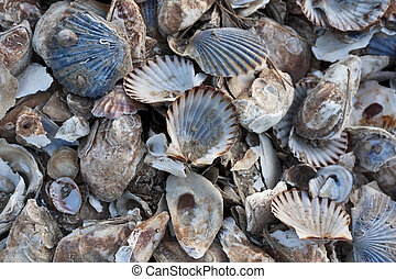 Pile of colorful shells at Wellfleet, Massachusetts on Cape...
