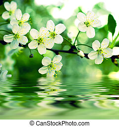 Branch of a blossoming apple-tree reflex on water