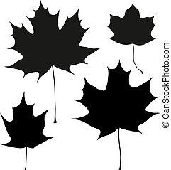 Set of vector black maple leaves outline on the white...