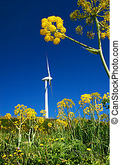 Eolic Turbine - Eolic turbine in a field of yellow flowers