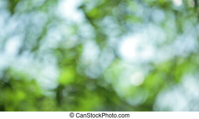 Defocused abstract nature background with green leaves and...