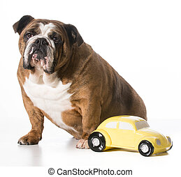 travelling with pets - concept of travelling with pets -...